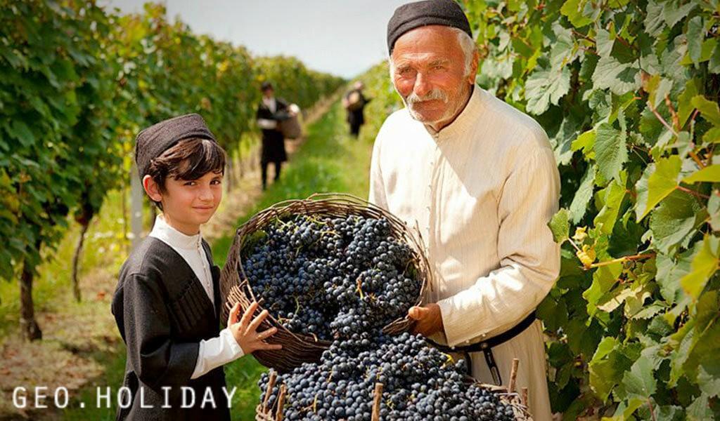 Виноградники в Алазанской Долине